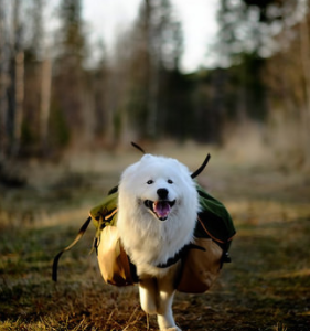 Five Fun Things to Do while Taking Your Dog Hiking
